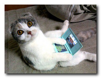 cat DS nintendo
